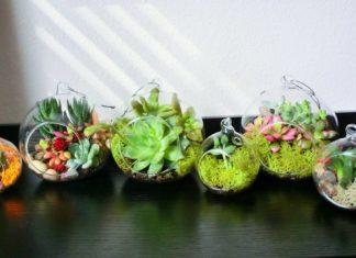 Como decorar su hogar con las plantas crasas