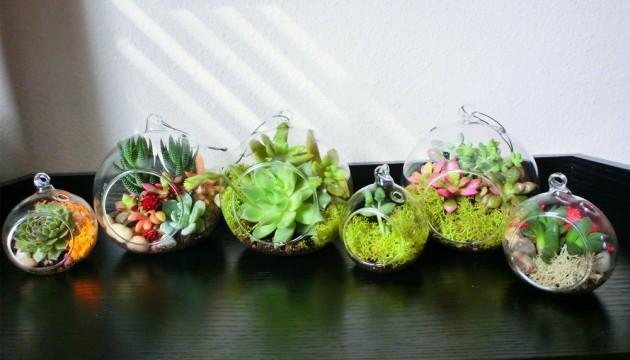 decorar hogar plantas crasas Home