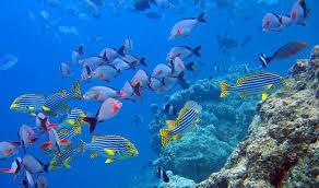 cancun mexico 2 Viaja a México y conoce sus impresionantes playas como Cancún