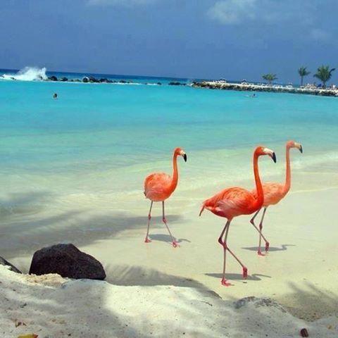 holbox isla mexico Pasa las vacaciones de tu vida en Isla Holbox, México.