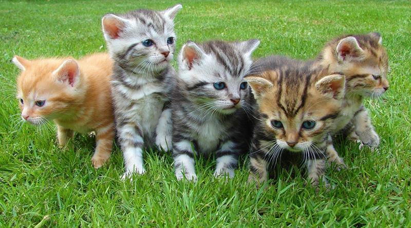 camada de gatos 7 gestos de que tu gato te protege de las malas energías