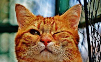 gatos perciben emociones 356x220 Home
