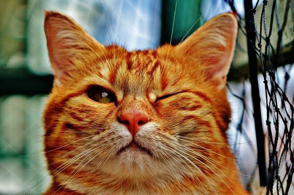 gestos de gatos