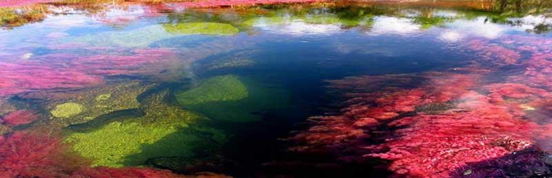 rio Cano Cristales 3 El río más hermoso del mundo se llama Caño Cristales