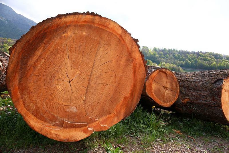 tipos de maderas para muebles