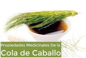 cola caballos ingredientes naturales LOS CUATRO MEJORES INGREDIENTES NATURALES