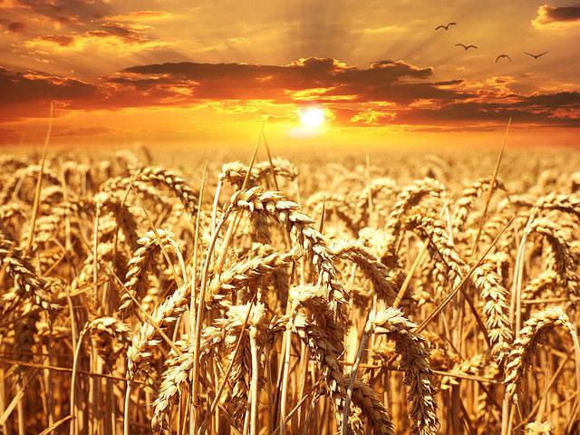 Cereales Alimentos comunes que pueden causarte problemas estomacales