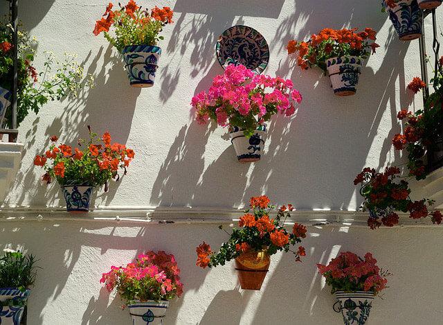 Macetas geranios Cómo empezar con un jardín en casa