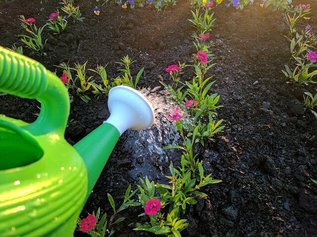 Riego plantas Cómo empezar con un jardín en casa