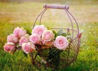 lenguaje flores