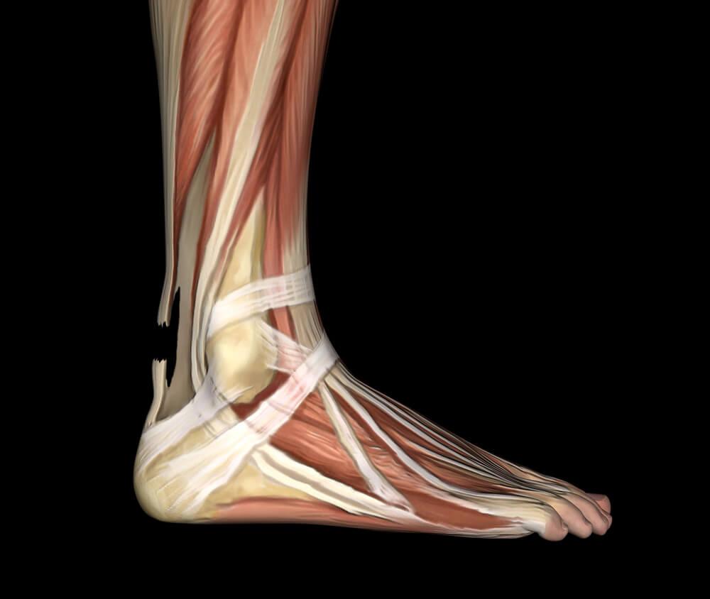 Musculos del tobillo y pie Consejos para prevenir lesiones de pie y tobillo