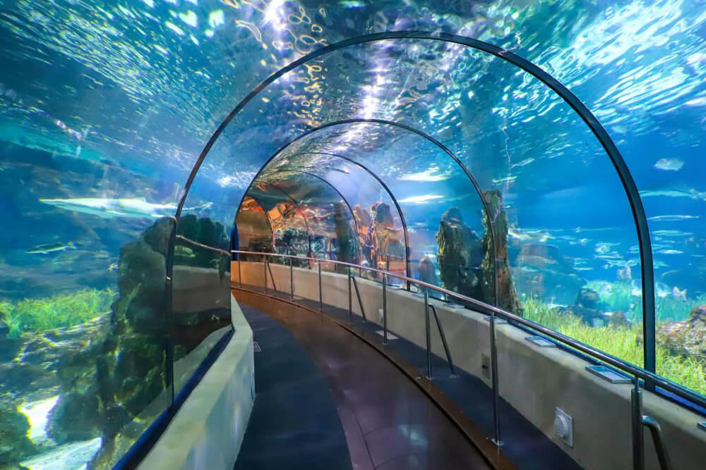 Aquarium Barcelona ¿Dónde ir en Semana Santa? Planes que te encantarán