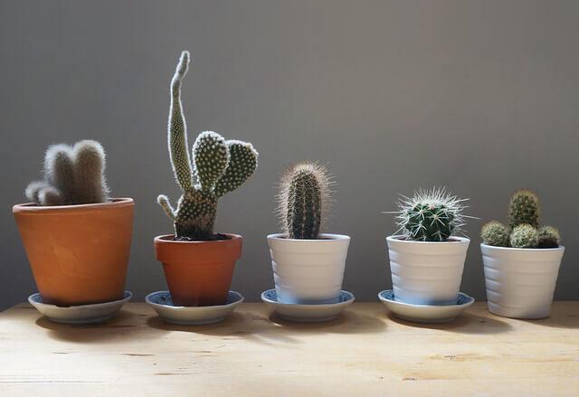 Jardín cactus ¿Cómo decorar un jardín pequeño?