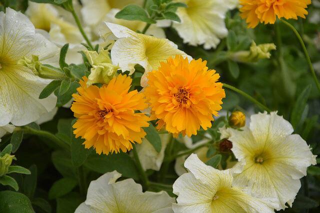 Jardín colores ¿Cómo decorar un jardín pequeño?