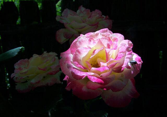 Jardín luces y sombras ¿Cómo decorar un jardín pequeño?