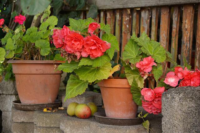 Jardín macetas ¿Cómo decorar un jardín pequeño?