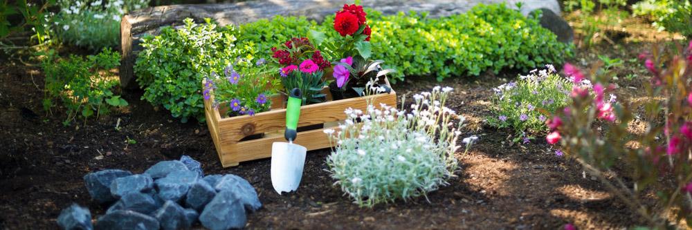 Jardín variado ¿Cómo hacer un jardín bonito sin dejarte el bolsillo en el intento?