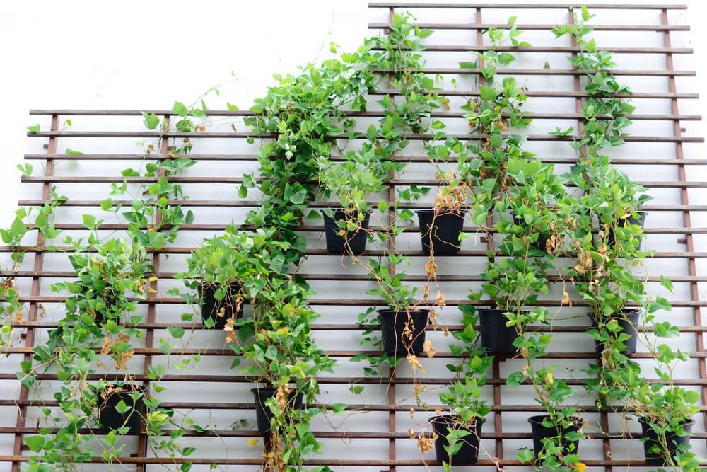 Jardin vertical con flores ¿Cómo hacer un jardín vertical? Pasos para elaborarlo