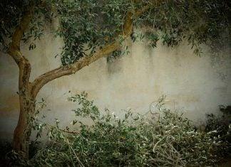 podar árboles y plantas