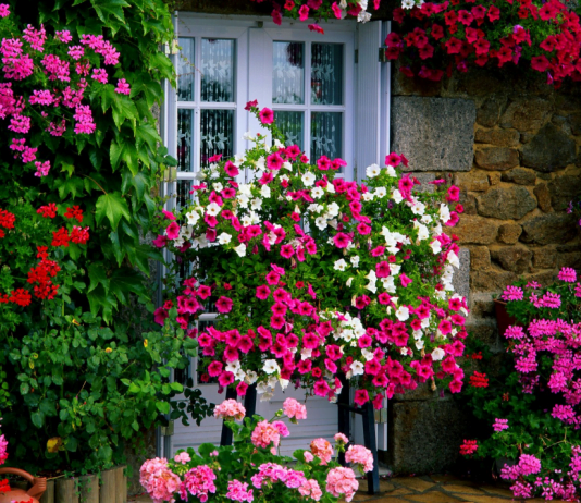 ¿Cuáles son los tipos de flores más populares en el mundo