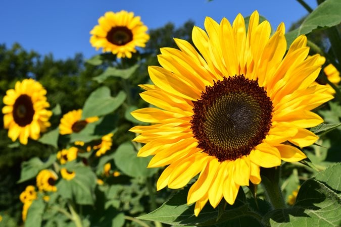tipos de flores más populares ¿Cuáles son los tipos de flores más populares?