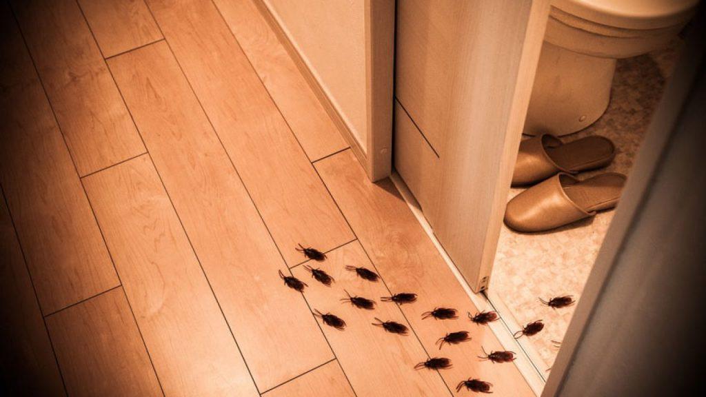 como prevenir y eliminar cucarachas en el hogar 1024x576 Prevenir y eliminar cucarachas en el hogar: Todo lo que debes saber