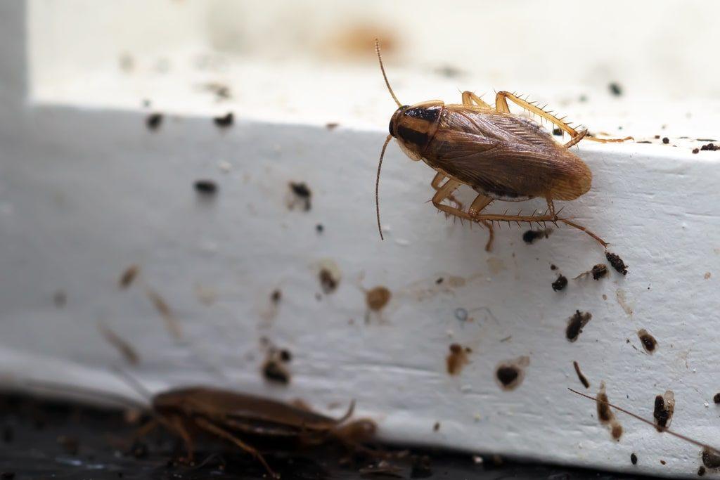 7 formas de evitar que los insectos entren a tu hogar