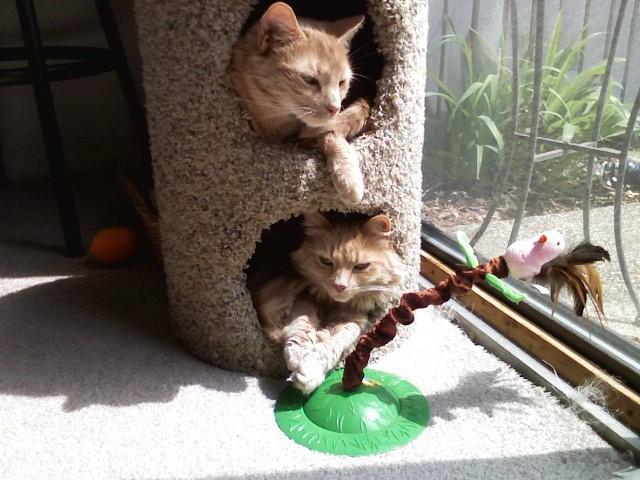 accesorios gatos Accesorios para gatos: Conoce cuales son los imprescindibles