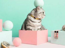 mejores accesorios para gatos 265x198 Home