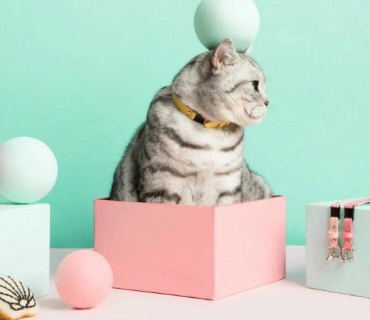 mejores accesorios para gatos